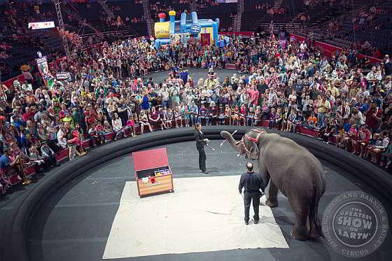 Ringling Bros - olifanten