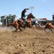 Montreal viert 375-jarig bestaan met rodeo