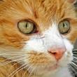 Brandweer reanimeert katten na brand Alphen aan den Rijn