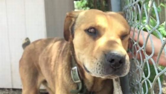 eindelijk vrijheid voor hond Rusty