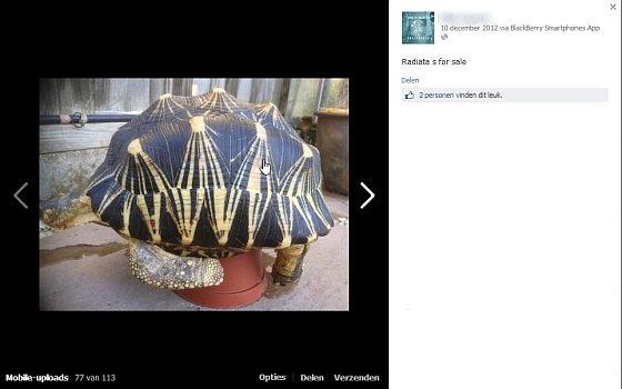 Stralenschildpad - dierenhandelaar
