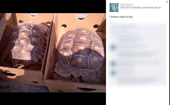 Schildpadden - dierenhandelaar
