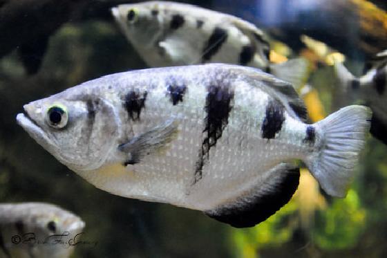 vissen herkennen gezichten