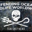 Sea Shepherd woedend op Martijn Krabbé