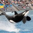 SeaWorld San Diego stopt met orkashows