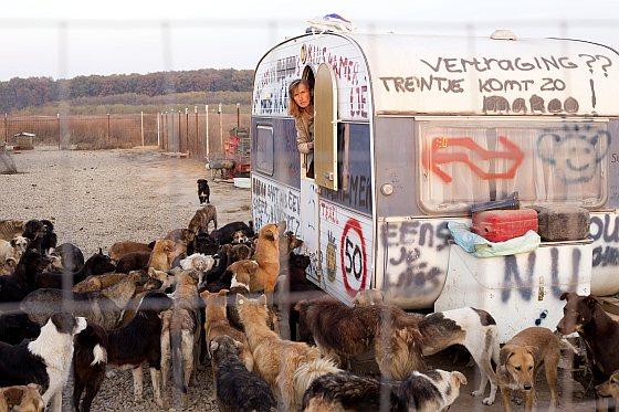 Secret shelter - zwerfhonden Roemenië