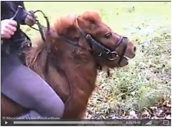 Shetlandpony tweede video