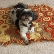Hond doodgeschoten met luchtbuks
