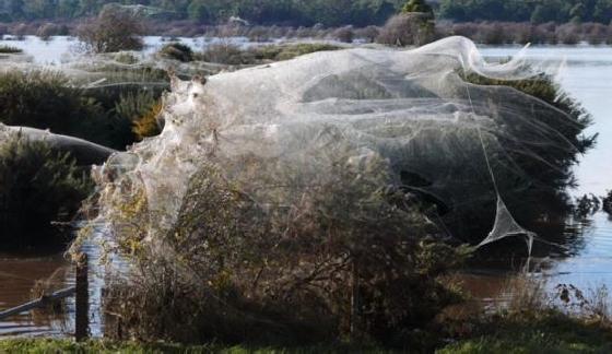 ballonvormig web