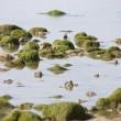 Derde Wereld Oceaan Dag geweldig succes