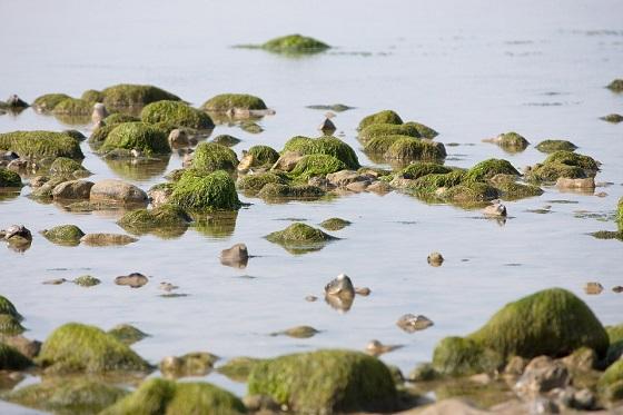 Wereld Oceaan Dag