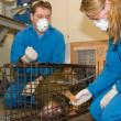 Karen's blog – Minding Animals en aapje Piep