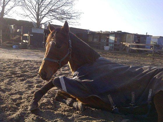 Stichting Paardenopvang - paarden opgevangen