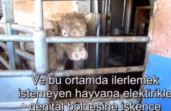 Turkije - Turks slachthuis