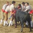 Stierenvechten Portugal