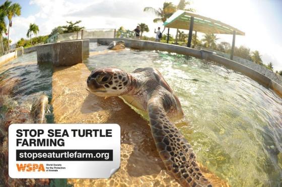 zeeschildpadkwekerij