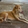 Illegale hondenslager gearresteerd in Mumbai