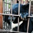 Zwarte beren klooster Thailand ten dode opgeschreven