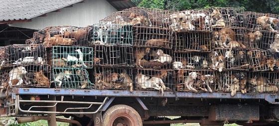 Thailand - 1200 honden gered