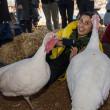 45 Miljoen kalkoenen de dupe van Thanksgiving