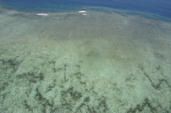 The Great Barrier Reef - zeekomkommers