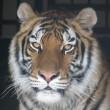 Emailactie: Circus zonder (wilde) dieren in Stadsdeel Zuid-Amsterdam