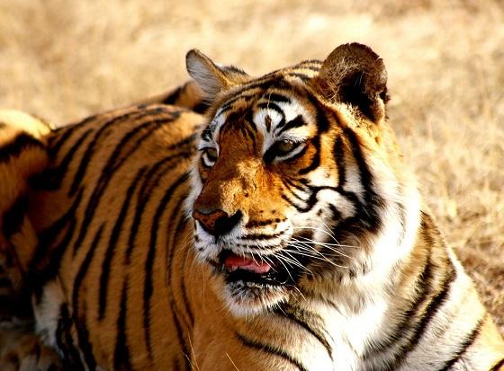 tijgerreservaat