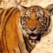 10 meest populaire dieren die met uitsterven worden bedreigd