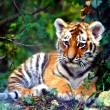 #GNvdD: In de val gelopen tijgerwelp bevrijd en herenigd moeder