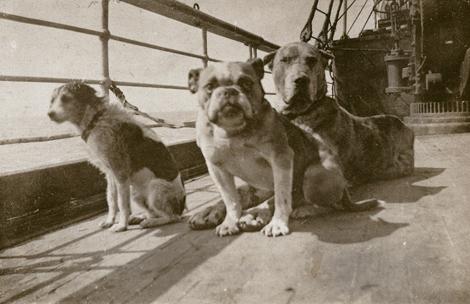 Honden die de ramp met de Titanic overleefden