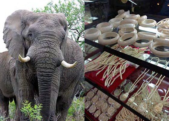 TRAFFIC - ivoor