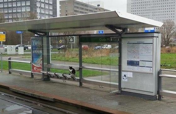 tram-poes