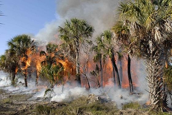 bosbrand verwoest olifantenopvang