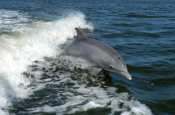 dolfijnensterfte