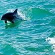 Toerisme en visserij Balearen bedreiging voor dolfijnen