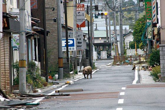 Varken Fukushima