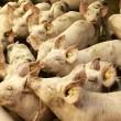 Jaarlijks tot 2,5 miljard overtredingen Nederlandse vee-industrie