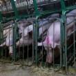 #GNvdD: Saoedische prins voorziet einde intensieve veehouderij