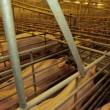 Huidige veehouderij onhoudbaar, ingrijpen noodzakelijk
