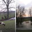 #GNvdD: Vastgevroren pony en zwaan gered