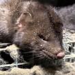 Alphense nertsenfokker doet aangifte tegen Animal Rights