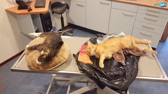 katten vermoord