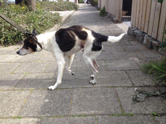 verwaarloosde hond
