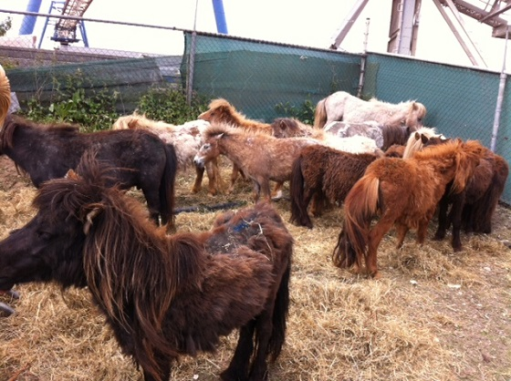 verwaarloosde pony's
