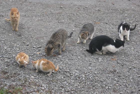 verwilderde katten