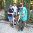 Happy end voor de drie zieligste beren uit Europa
