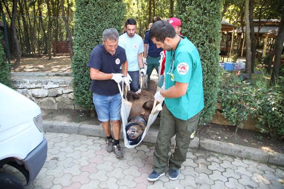 zieligste beren