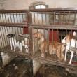 Dierenwinkels in New Jersey mogen in de toekomst alleen nog maar asieldieren verkopen