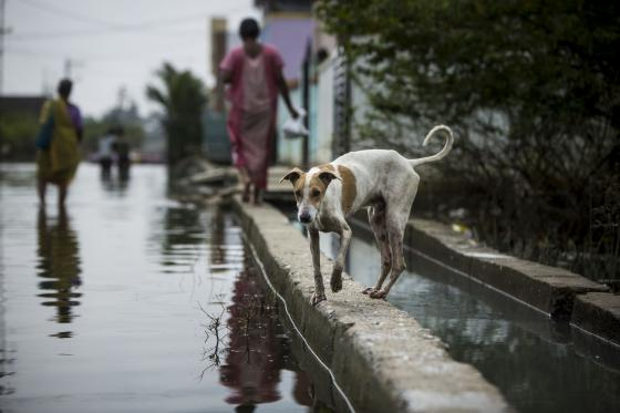 verwoestende overstromingen