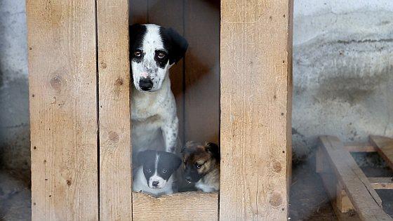 Teef met twee pups - overheidsasielen